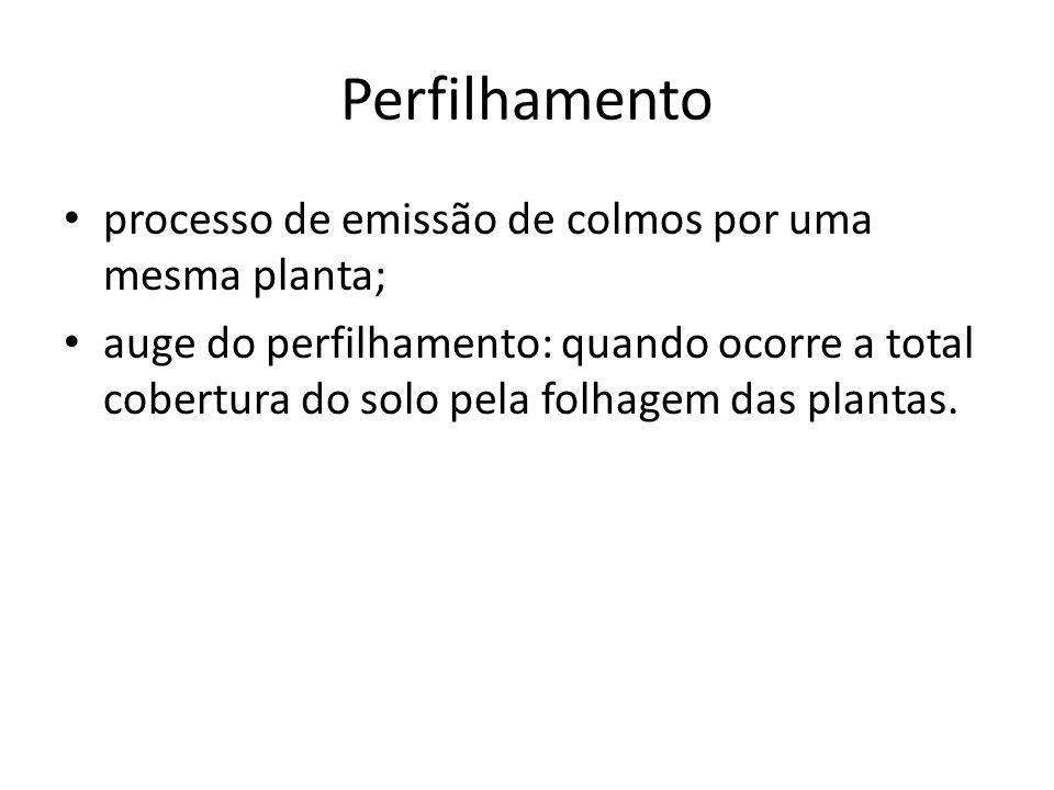 Perfilhamento processo de emissão de colmos por uma mesma planta; auge do perfilhamento: quando ocorre a total cobertura do solo pela folhagem das pla