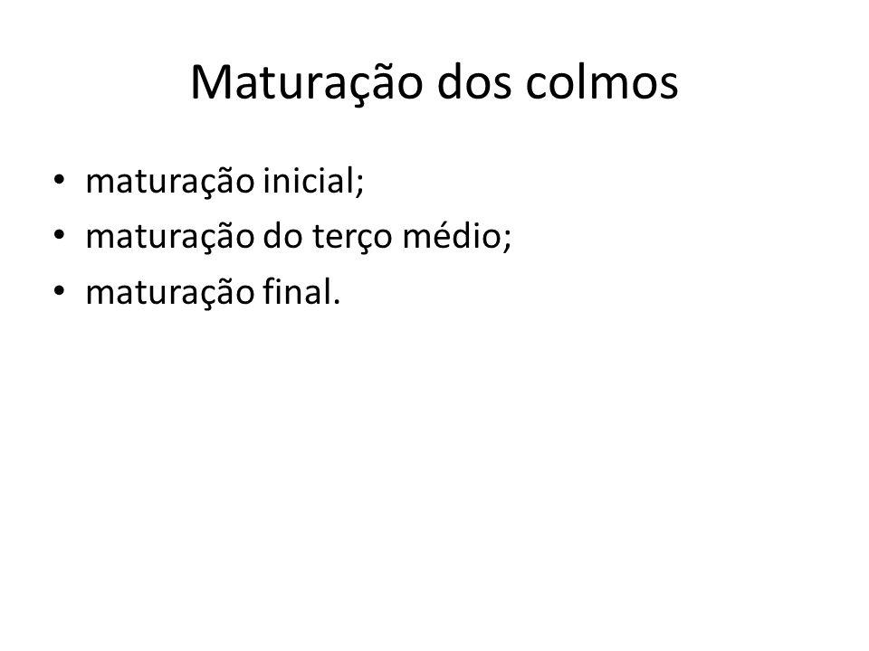 Maturação dos colmos maturação inicial; maturação do terço médio; maturação final.