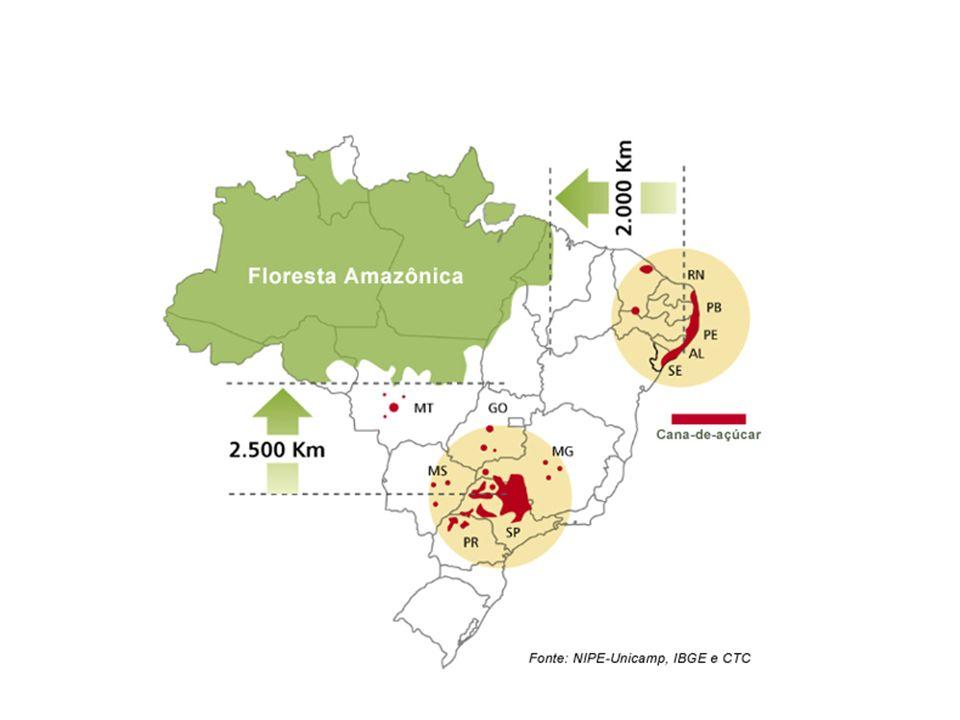 MERCADO INTERNACIONAL Mais de 100 países produzem açúcar em todo o mundo quer a partir de beterraba ou de cana-de-açúcar.
