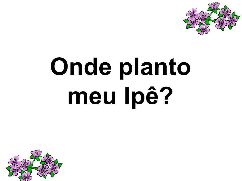 Onde planto meu Ipê?