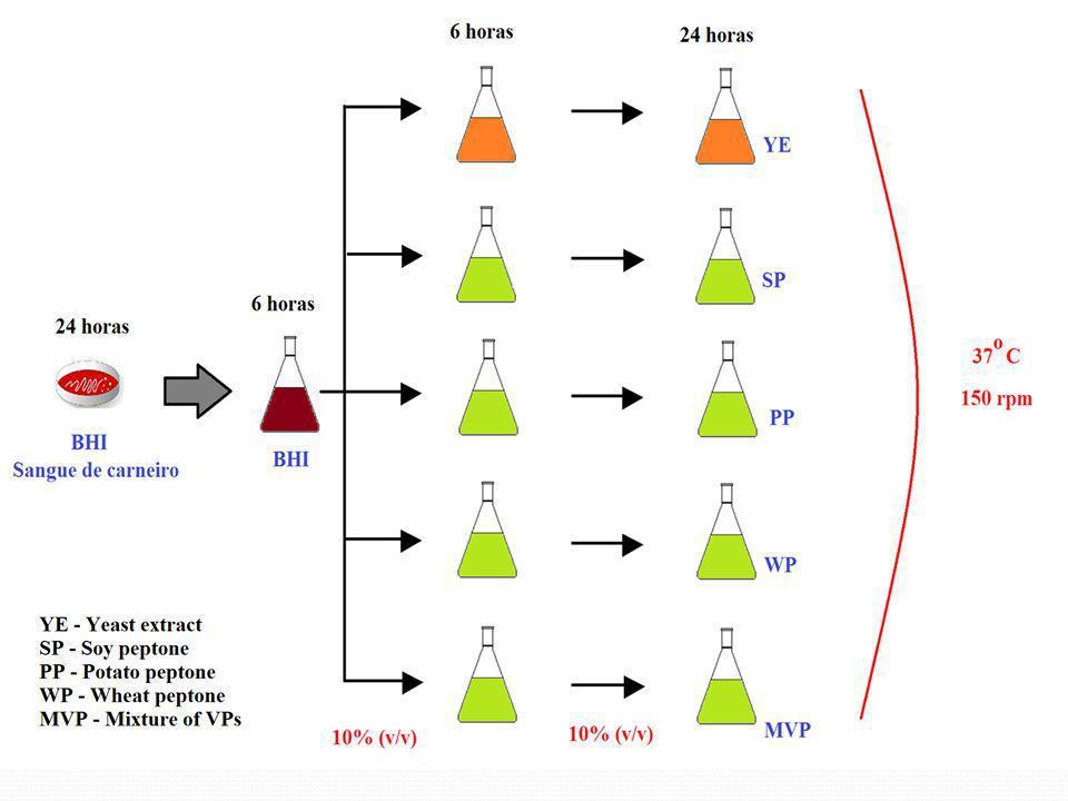 Métodos e Análises Crescimento celular Método gravimétrico Purificação de AH Precipitação com etanol Ressuspensão em NaCl Quantificação de AH Método do carbazol modificado Quantificação de proteínas ou petídeos Método de Lowry Ácidos orgânicos HPLC Massa molar HPLC