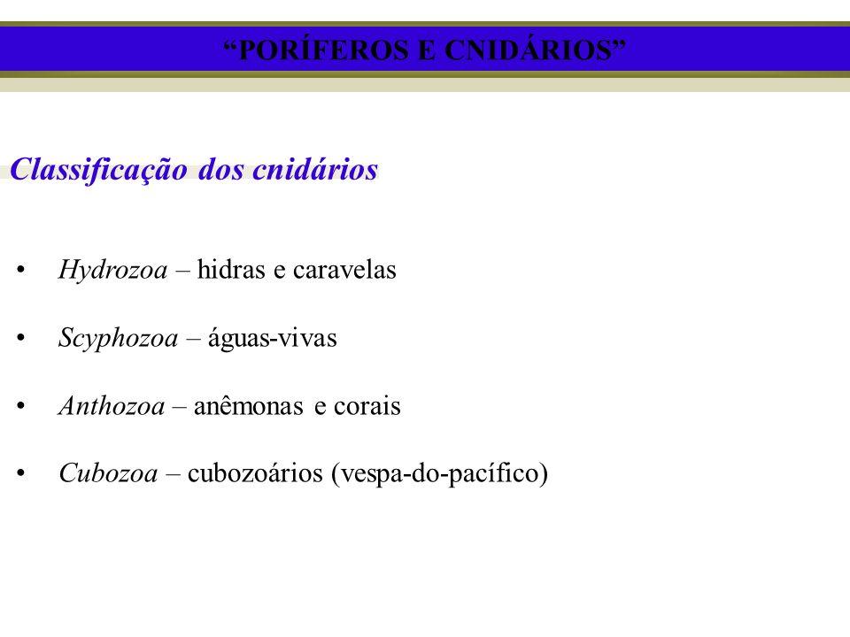 Classificação dos cnidários Hydrozoa – hidras e caravelas Scyphozoa – águas-vivas Anthozoa – anêmonas e corais Cubozoa – cubozoários (vespa-do-pacífic