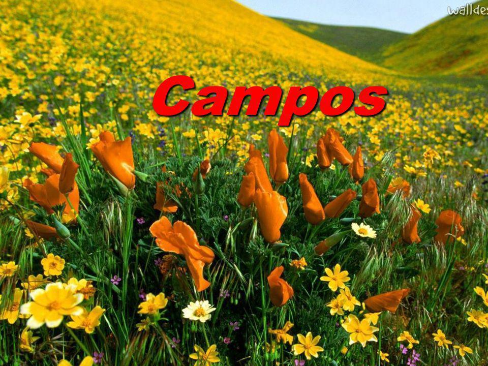 O bioma é conhecido como campos do alto da serra.