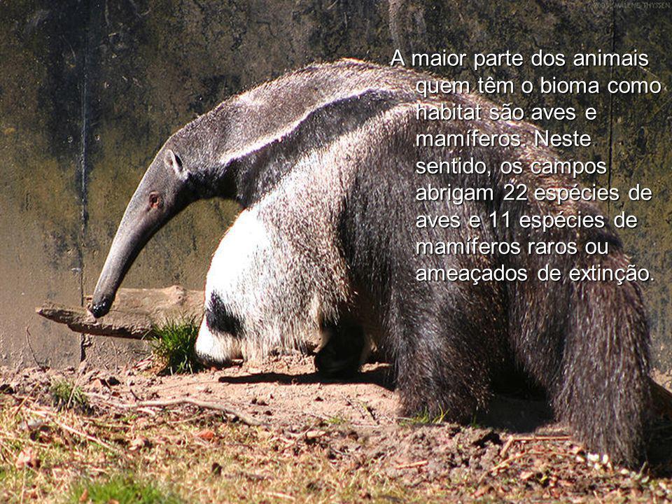 A maior parte dos animais quem têm o bioma como habitat são aves e mamíferos. Neste sentido, os campos abrigam 22 espécies de aves e 11 espécies de ma