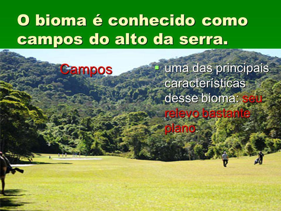 O bioma é conhecido como campos do alto da serra. Campos uma das principais características desse bioma: seu relevo bastante plano. uma das principais