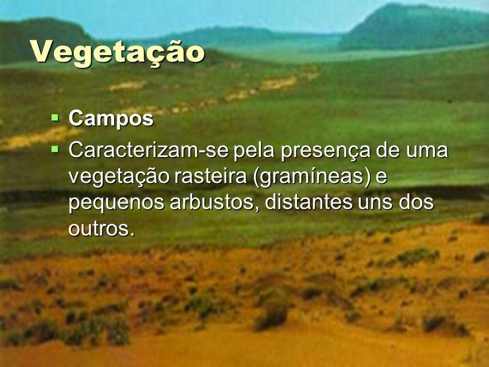 Vegetação Campos Campos Caracterizam-se pela presença de uma vegetação rasteira (gramíneas) e pequenos arbustos, distantes uns dos outros. Caracteriza