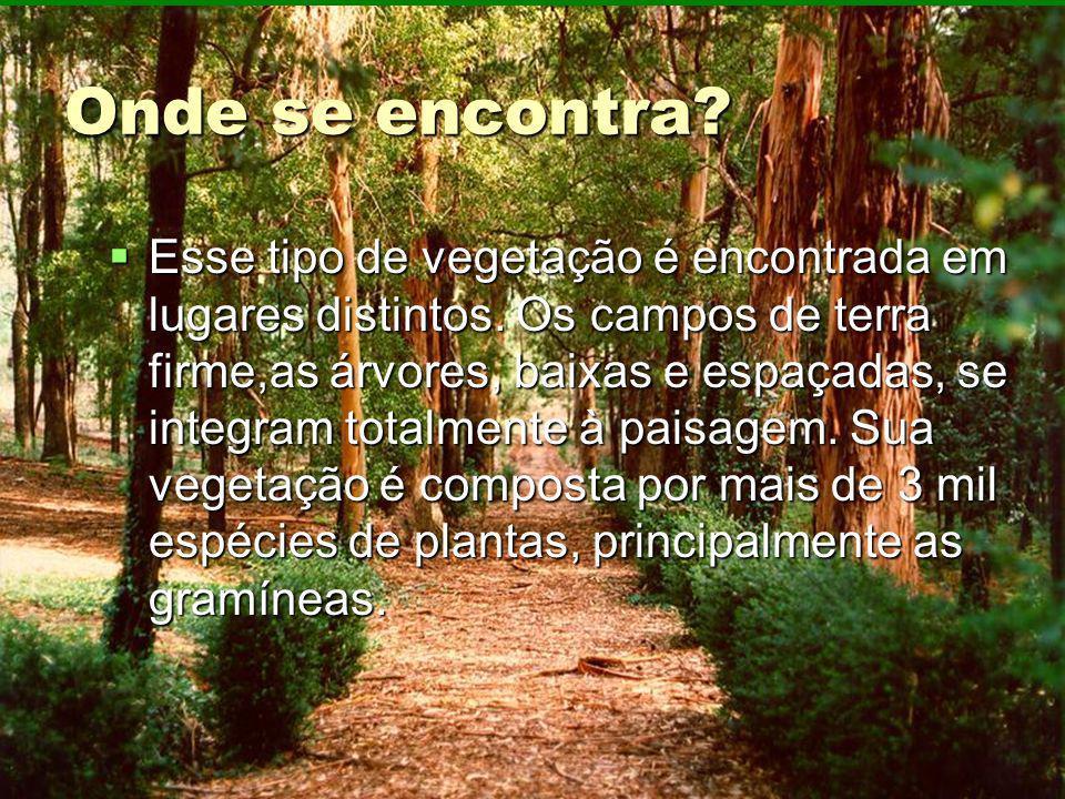 Onde se encontra? Esse tipo de vegetação é encontrada em lugares distintos. Os campos de terra firme,as árvores, baixas e espaçadas, se integram total
