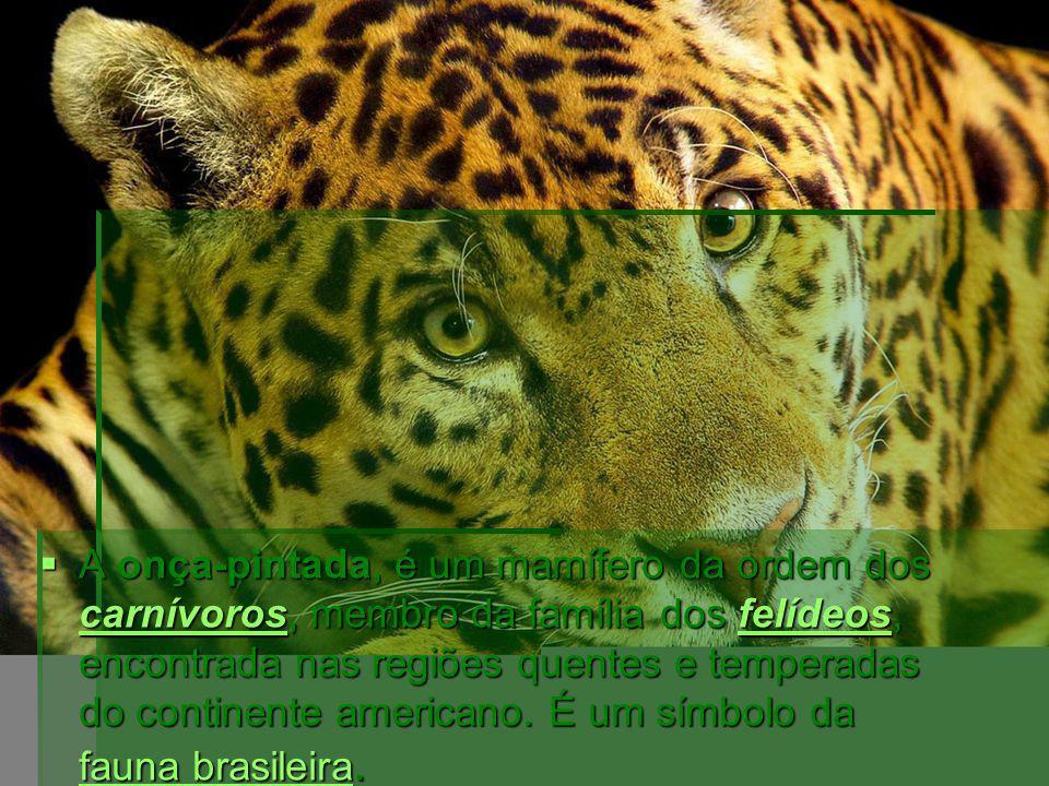 A onça-pintada, é um mamífero da ordem dos carnívoros, membro da família dos felídeos, encontrada nas regiões quentes e temperadas do continente ameri