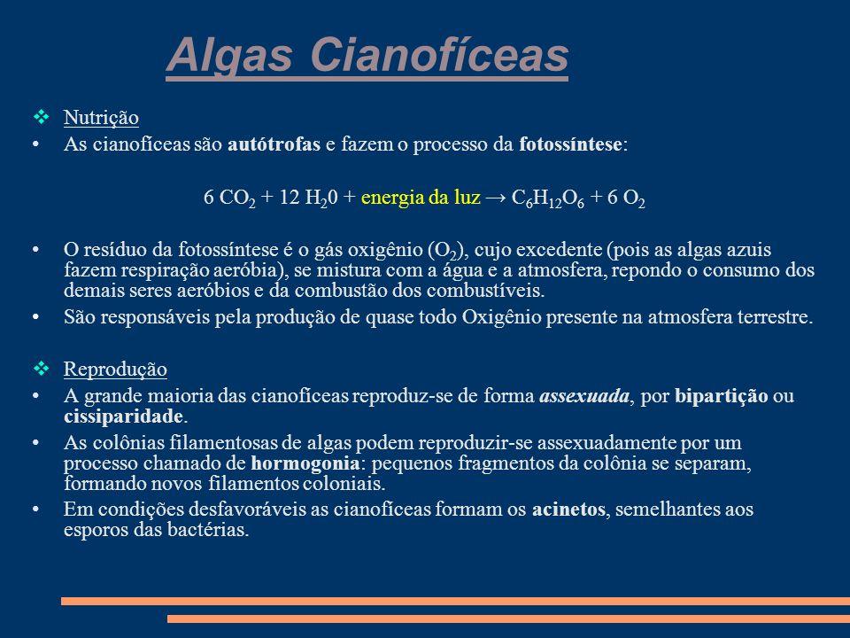 Algas Cianofíceas O Conceito As algas cianofíceas também são chamadas de algas azuis.