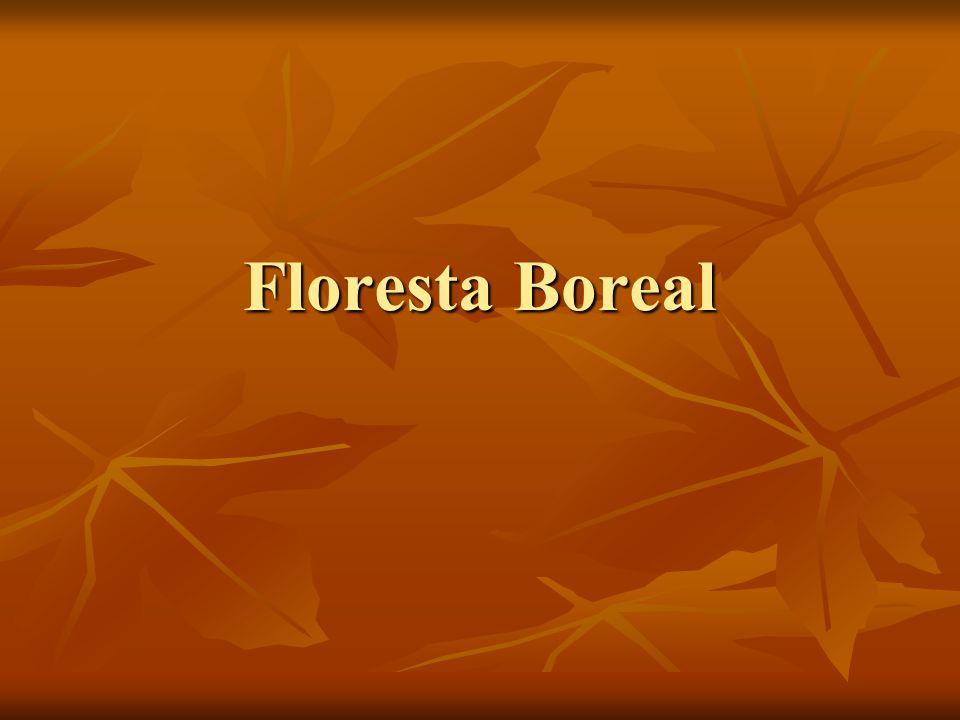 Características A floresta boreal é uma mistura de betuláceas e de resinosas.