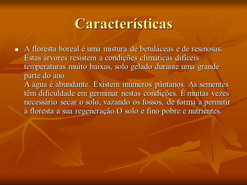 Características A floresta boreal é uma mistura de betuláceas e de resinosas. Estas árvores resistem a condições climáticas difíceis: temperaturas mui