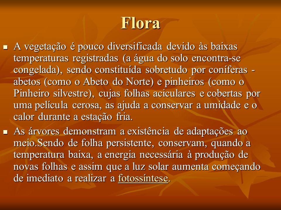 Flora A vegetação é pouco diversificada devido às baixas temperaturas registradas (a água do solo encontra-se congelada), sendo constituída sobretudo