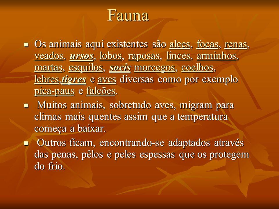 Fauna Fauna Os animais aqui existentes são alces, focas, renas, veados, ursos, lobos, raposas, linces, arminhos, martas, esquilos, socis morcegos, coe