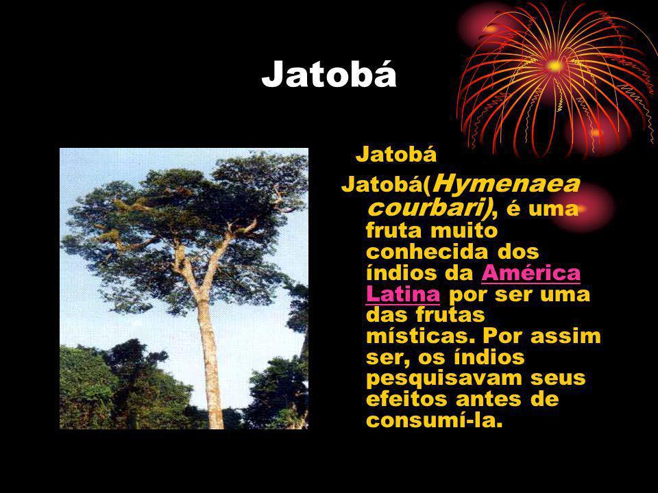 Jatobá Jatobá Jatobá( Hymenaea courbari), é uma fruta muito conhecida dos índios da América Latina por ser uma das frutas místicas. Por assim ser, os