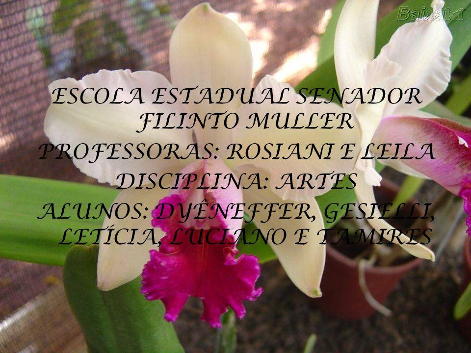 ESCOLA ESTADUAL SENADOR FILINTO MULLER PROFESSORAS: ROSIANI E LEILA DISCIPLINA: ARTES ALUNOS: DYÊNEFFER, GESIELLI, LETÍCIA, LUCIANO E TAMIRES