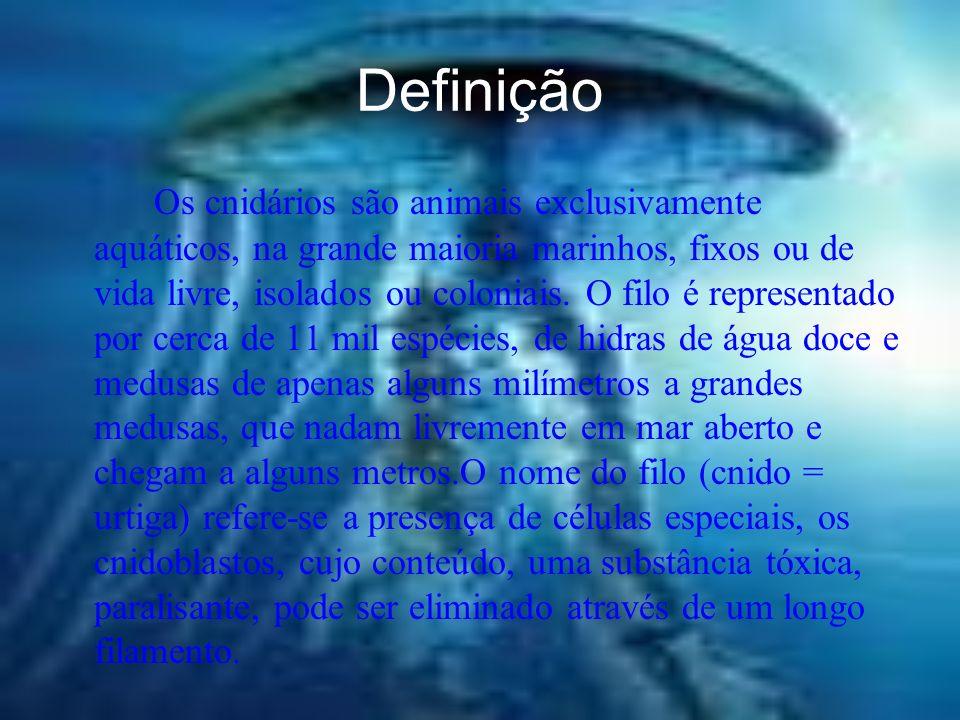 Definição Os cnidários são animais exclusivamente aquáticos, na grande maioria marinhos, fixos ou de vida livre, isolados ou coloniais.