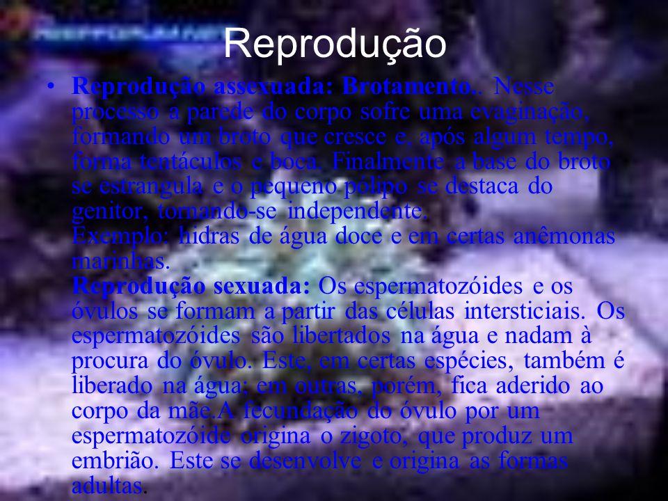 Reprodução Reprodução assexuada: Brotamento..