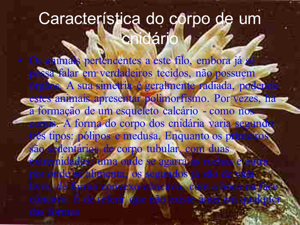 Característica do corpo de um cnidário Os animais pertencentes a este filo, embora já se possa falar em verdadeiros tecidos, não possuem órgãos.