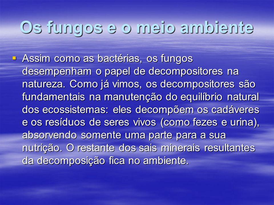 Os fungos e o meio ambiente Assim como as bactérias, os fungos desempenham o papel de decompositores na natureza. Como já vimos, os decompositores são