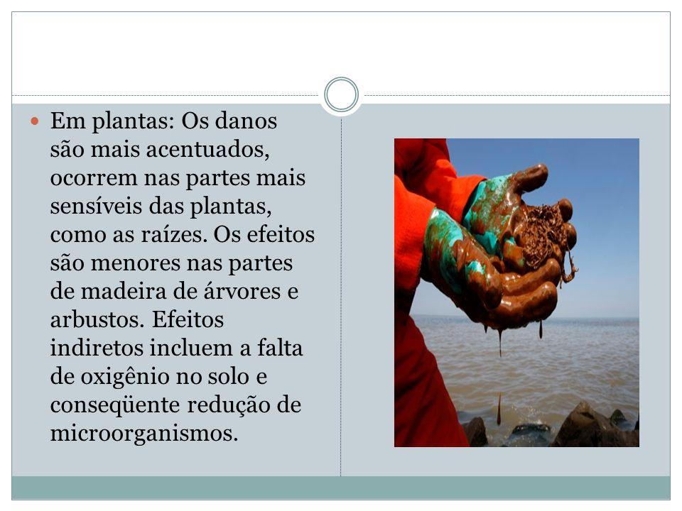 Em plantas: Os danos são mais acentuados, ocorrem nas partes mais sensíveis das plantas, como as raízes.