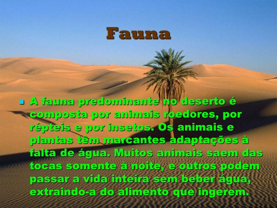 Fauna A fauna predominante no deserto é composta por animais roedores, por répteis e por insetos. Os animais e plantas têm marcantes adaptações à falt