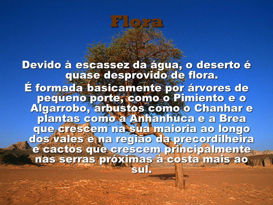 Flora Devido à escassez da água, o deserto é quase desprovido de flora. É formada basicamente por árvores de pequeno porte, como o Pimiento e o Algarr