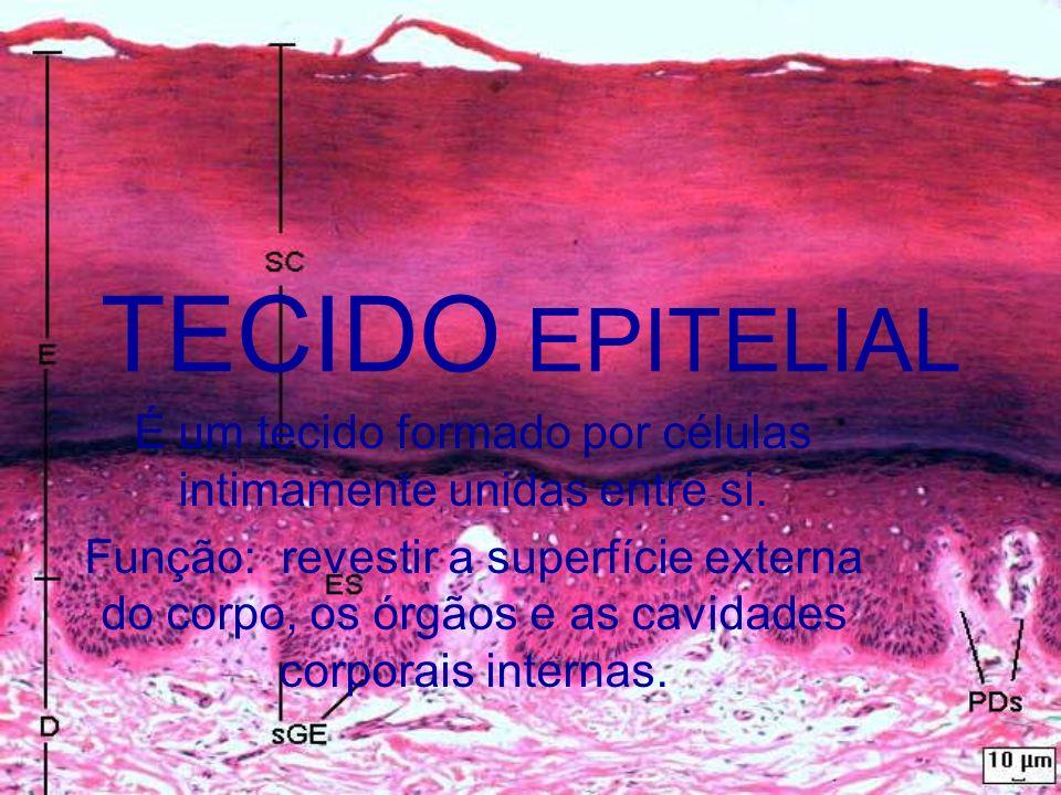 TECIDO EPITELIAL É um tecido formado por células intimamente unidas entre si. Função: revestir a superfície externa do corpo, os órgãos e as cavidades