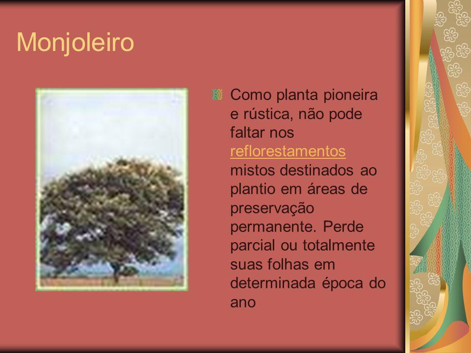 Monjoleiro Como planta pioneira e rústica, não pode faltar nos reflorestamentos mistos destinados ao plantio em áreas de preservação permanente. Perde