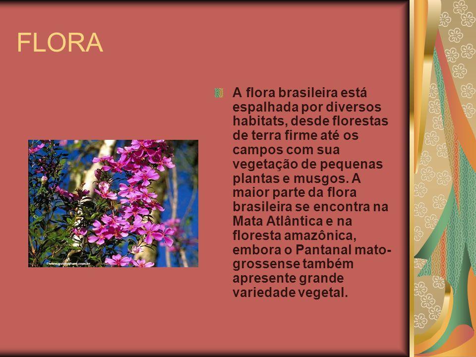 FLORA A flora brasileira está espalhada por diversos habitats, desde florestas de terra firme até os campos com sua vegetação de pequenas plantas e mu