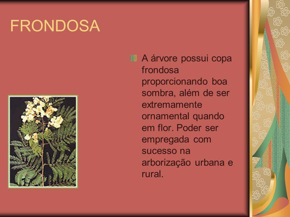 FRONDOSA A árvore possui copa frondosa proporcionando boa sombra, além de ser extremamente ornamental quando em flor. Poder ser empregada com sucesso