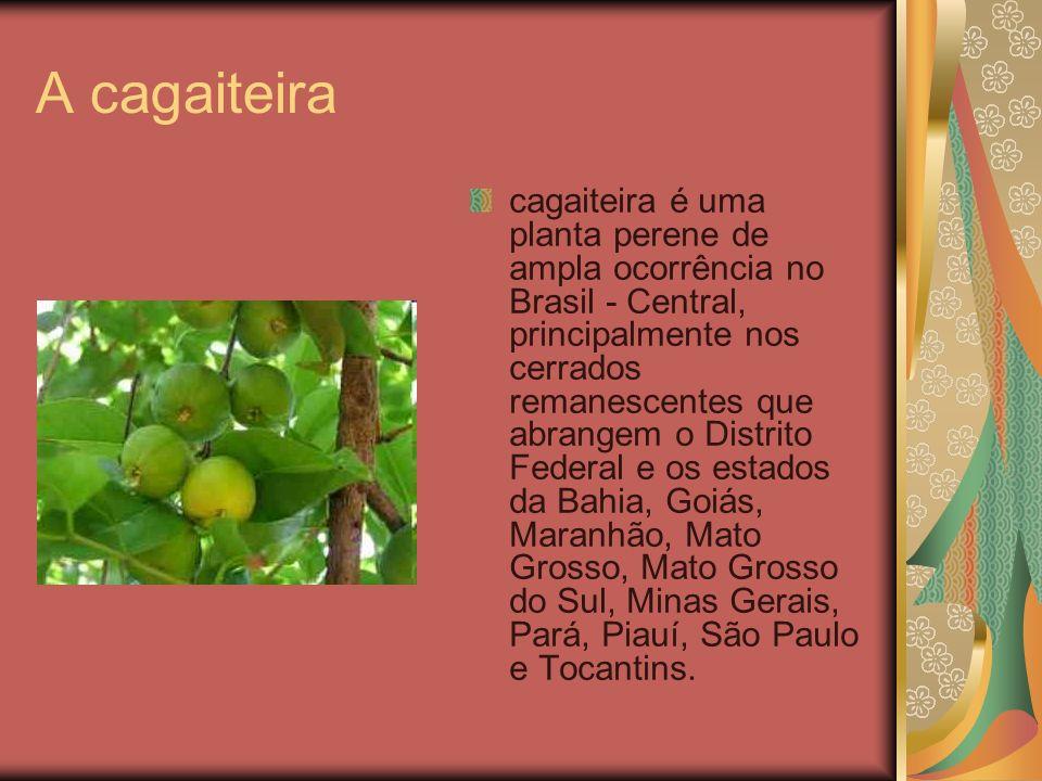 A cagaiteira cagaiteira é uma planta perene de ampla ocorrência no Brasil - Central, principalmente nos cerrados remanescentes que abrangem o Distrito