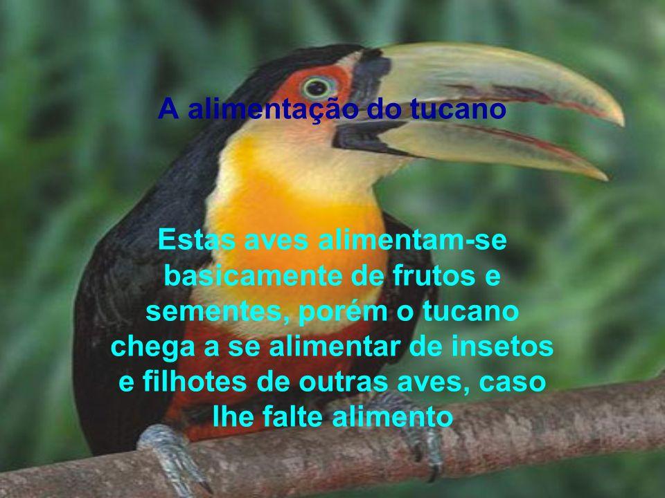 A alimentação do tucano Estas aves alimentam-se basicamente de frutos e sementes, porém o tucano chega a se alimentar de insetos e filhotes de outras