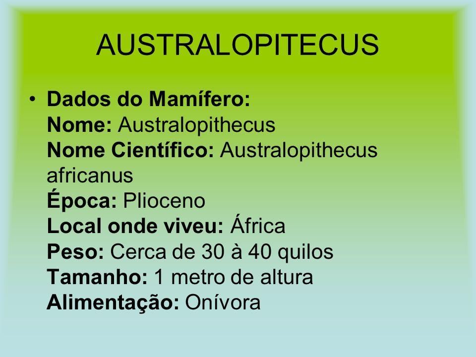 AUSTRALOPITECUS Dados do Mamífero: Nome: Australopithecus Nome Científico: Australopithecus africanus Época: Plioceno Local onde viveu: África Peso: Cerca de 30 à 40 quilos Tamanho: 1 metro de altura Alimentação: Onívora