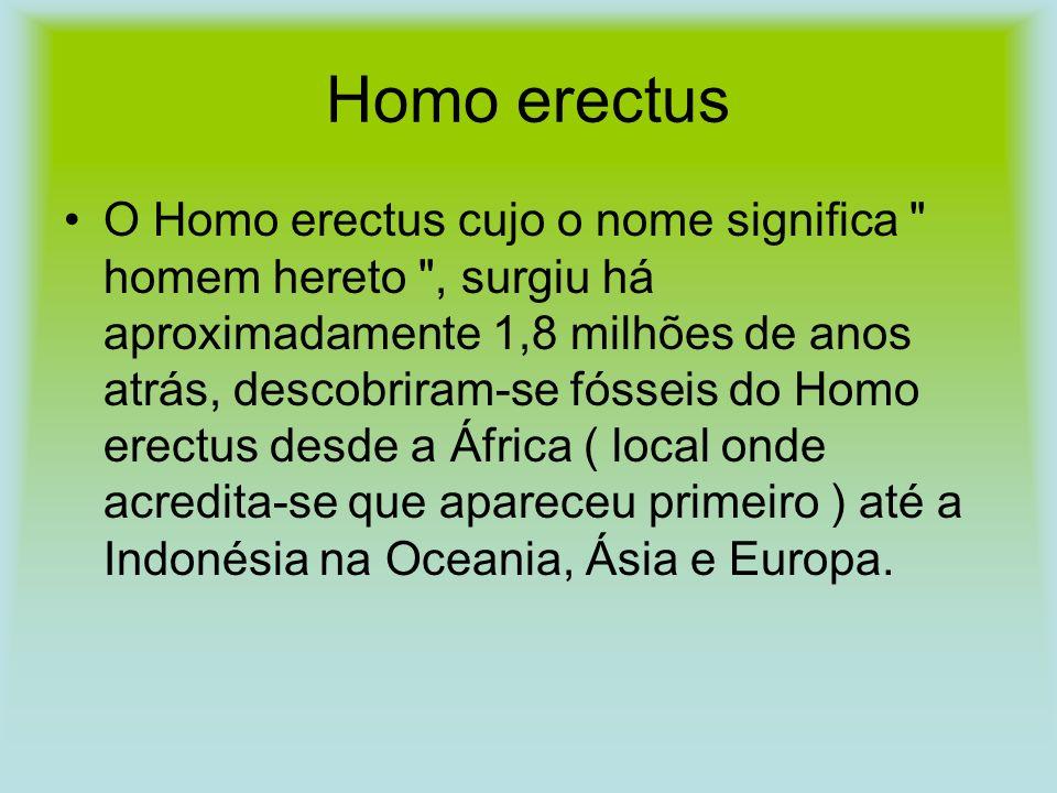 O Homo erectus cujo o nome significa homem hereto , surgiu há aproximadamente 1,8 milhões de anos atrás, descobriram-se fósseis do Homo erectus desde a África ( local onde acredita-se que apareceu primeiro ) até a Indonésia na Oceania, Ásia e Europa.