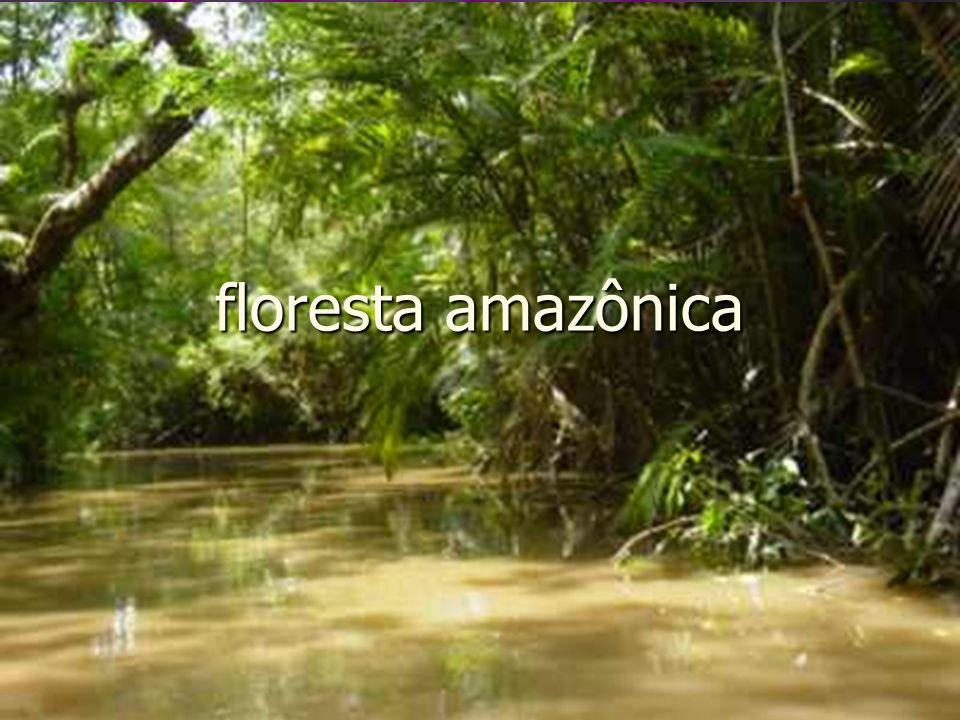 Itens pesquisados Localização Localização Características do ambiente Características do ambiente Clima Clima Vegetação Vegetação fauna fauna