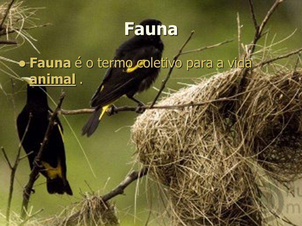 Fauna Fauna é o termo coletivo para a vida animal.