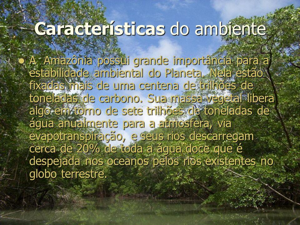 Características do ambiente A Amazônia possui grande importância para a estabilidade ambiental do Planeta.