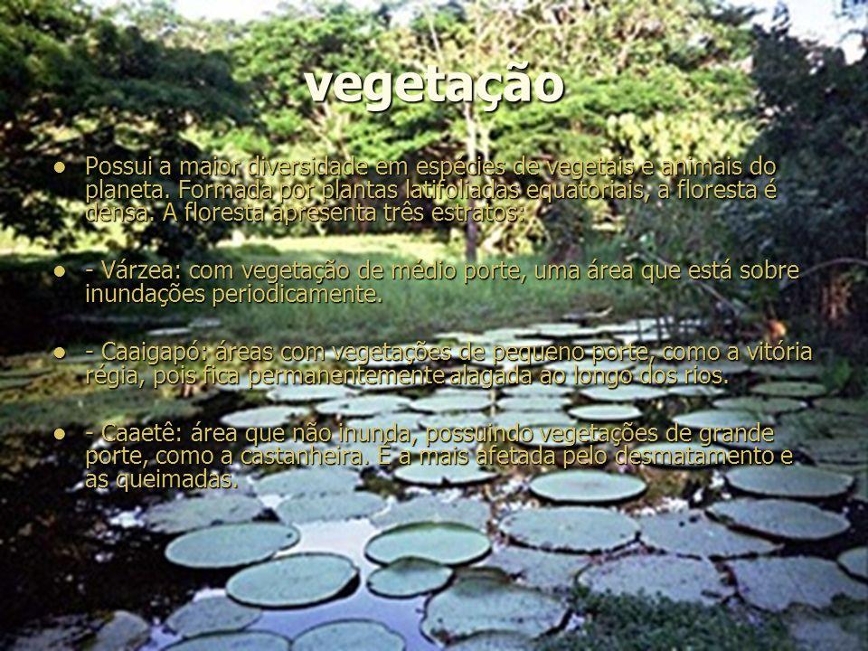 vegetação Possui a maior diversidade em espécies de vegetais e animais do planeta.