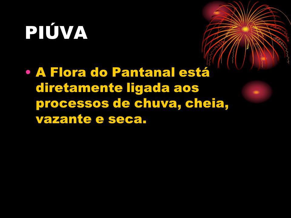 A Flora do Pantanal está diretamente ligada aos processos de chuva, cheia, vazante e seca.