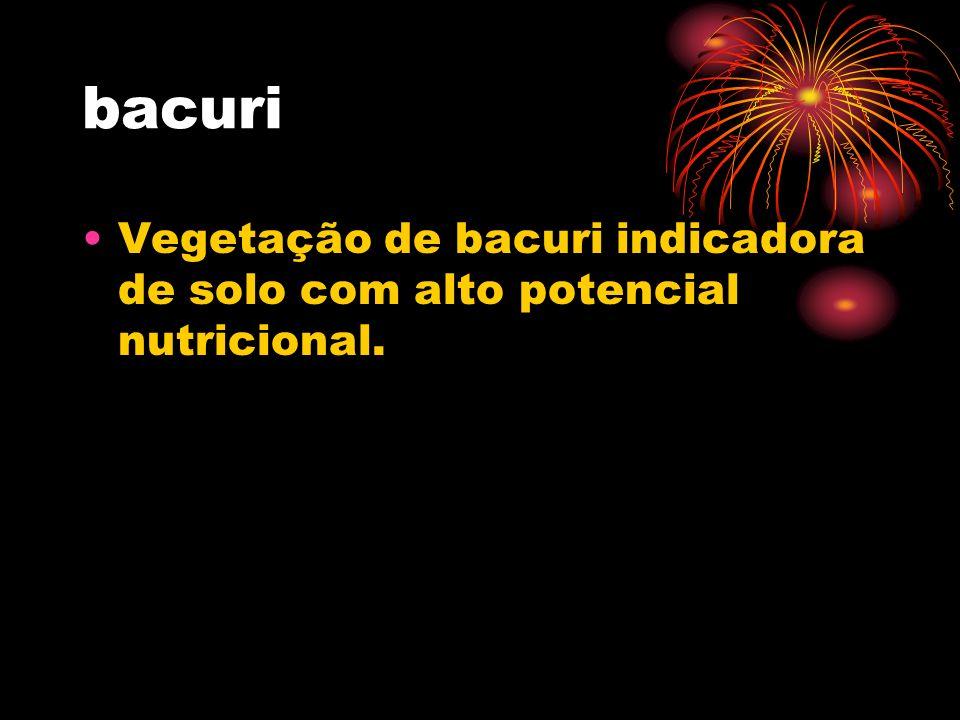 Vegetação de bacuri indicadora de solo com alto potencial nutricional.
