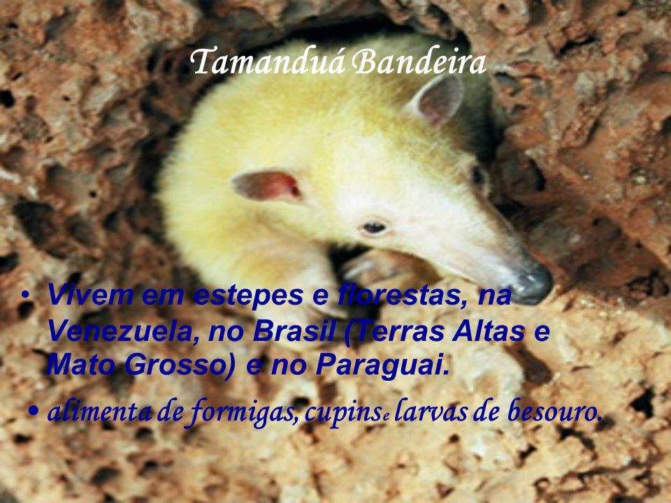 Vivem em estepes e florestas, na Venezuela, no Brasil (Terras Altas e Mato Grosso) e no Paraguai. alimenta de formigas, cupins e larvas de besouro.