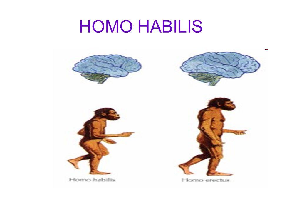 HOMO SAPIENS O Homo sapiens ( nossa espécie ) surgiu há aproximadamente 150 mil anos atrás, possivelmente na África, como resultado de adaptações de Homo erectus ao meio em que eles viviam.