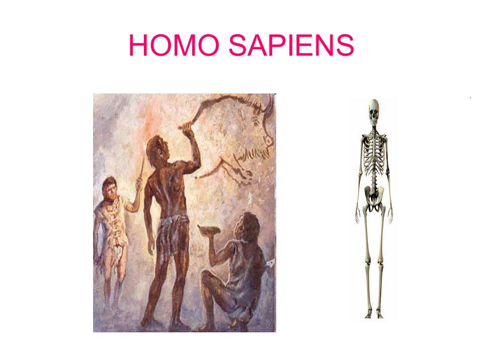 HOMO ERECTUS..