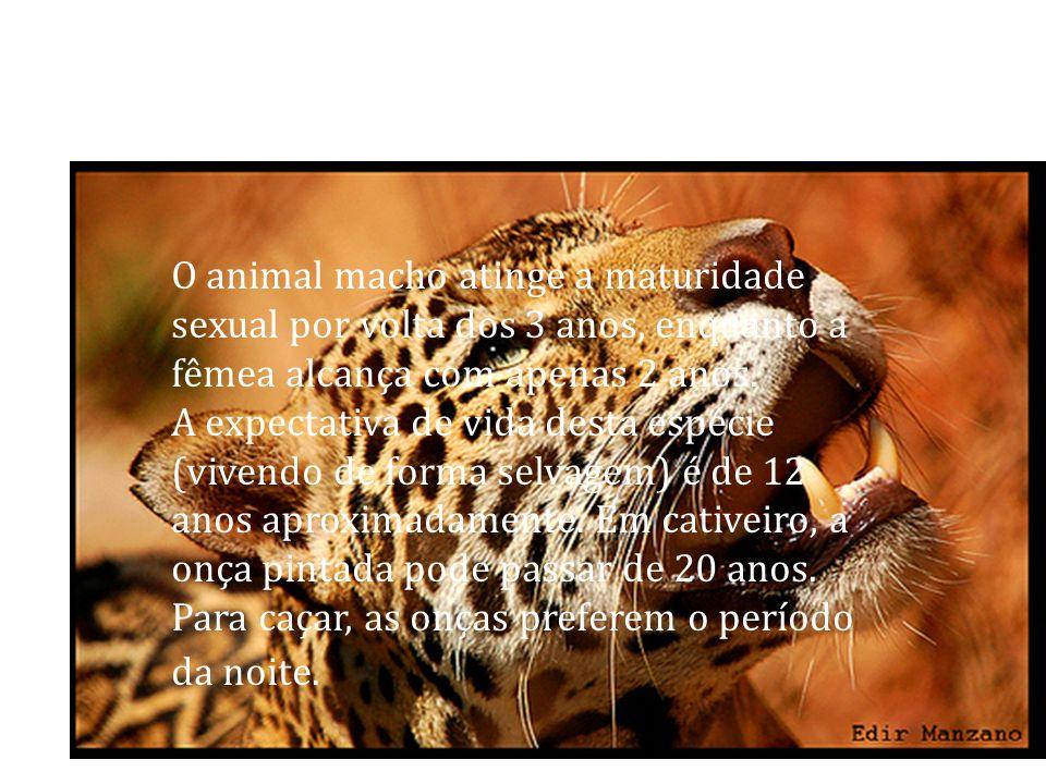 O animal macho atinge a maturidade sexual por volta dos 3 anos, enquanto a fêmea alcança com apenas 2 anos. A expectativa de vida desta espécie (viven