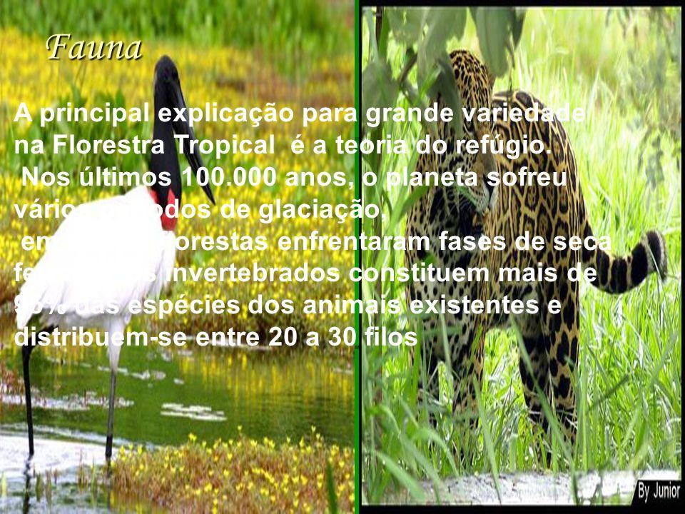 Fauna A principal explicação para grande variedade na Florestra Tropical é a teoria do refúgio.