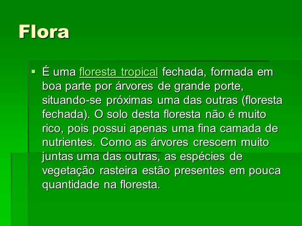 Flora É uma floresta tropical fechada, formada em boa parte por árvores de grande porte, situando-se próximas uma das outras (floresta fechada).