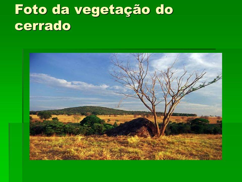 Foto da vegetação do cerrado