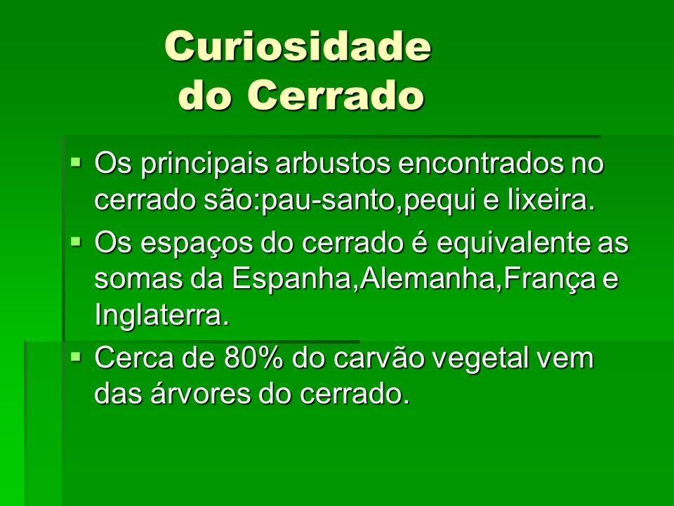 Curiosidade do Cerrado Curiosidade do Cerrado Os principais arbustos encontrados no cerrado são:pau-santo,pequi e lixeira. Os principais arbustos enco