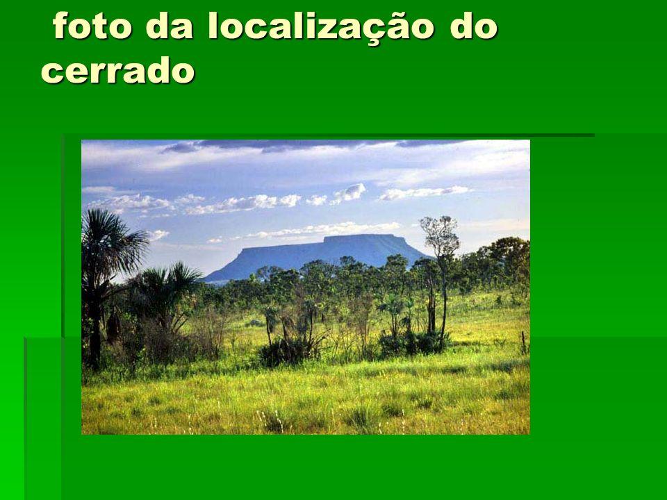 foto da localização do cerrado foto da localização do cerrado