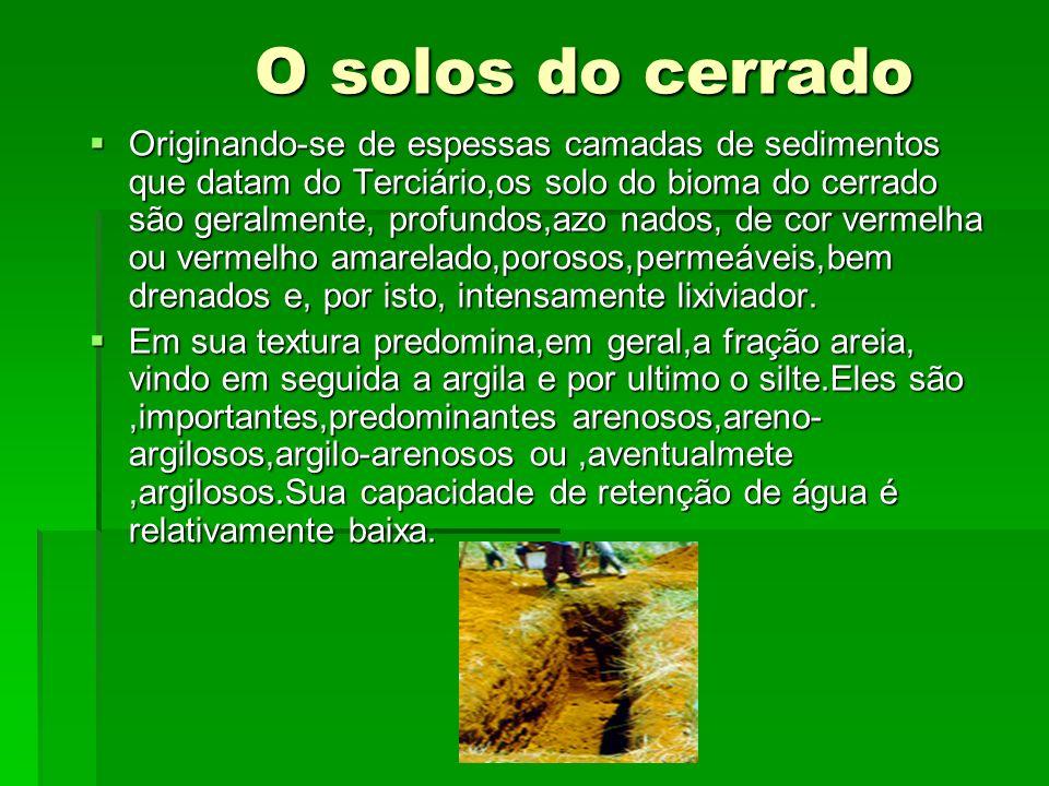 O solos do cerrado O solos do cerrado Originando-se de espessas camadas de sedimentos que datam do Terciário,os solo do bioma do cerrado são geralment